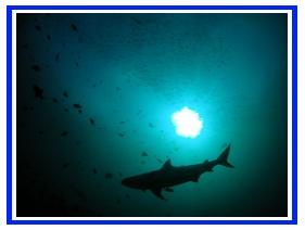 Shark_Silhouette - wikimedia.jpg