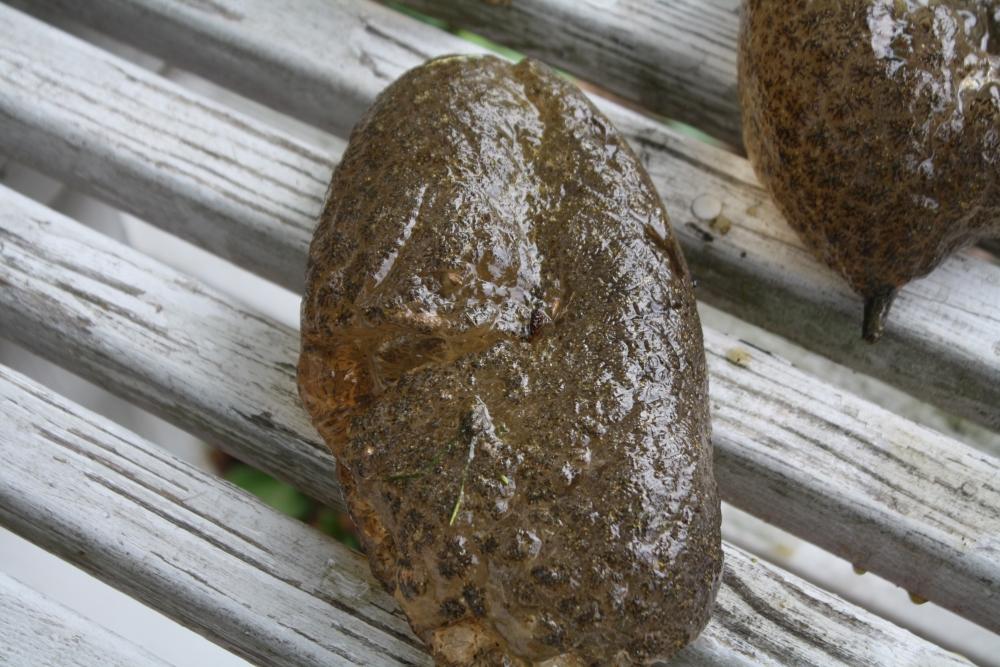 30 cm inside the anus 8