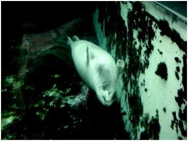 harbor seal at New England Aquarium