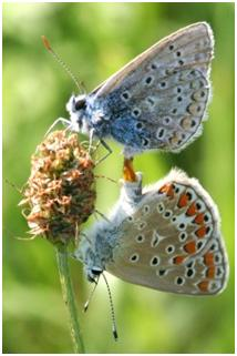 What are these butterflies doing? | Ask a Naturalist®