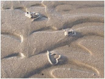 What made these swirls in the sand?