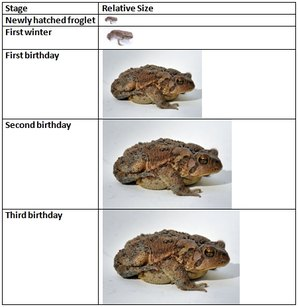 toad-growth-chart