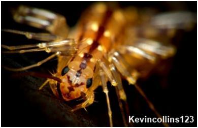 house centipeded