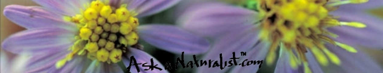 Ask a Naturalist.com